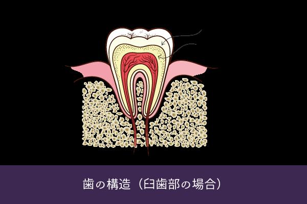 歯はどうして黄ばむのか?訪問歯科、専門的口腔ケアのオーラルアップ